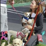 St Rocco Foundation Animal Rights Supporter Dream Change