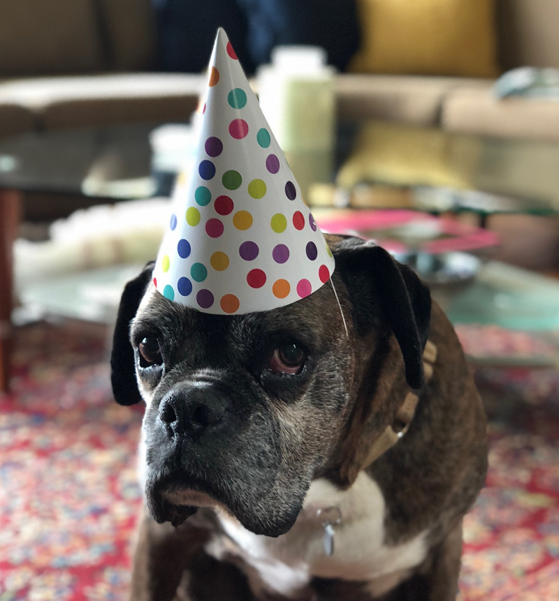 Dog Birthday because of Dog Rescue (web)