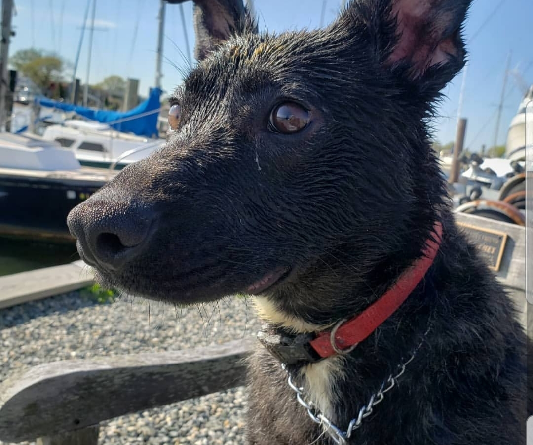 Mack Big Springs Foster Adopt Dog Rescue St Rocco Foundation Photo 5